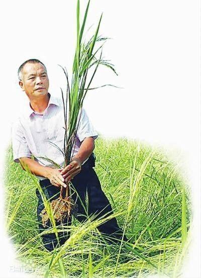 """又一个袁隆平,他的一株""""野草""""将养活几亿国人?"""