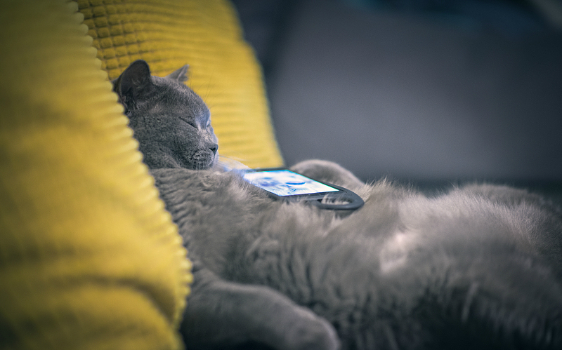依靠养猫来吸粉,网红经济开始面临内容与流量痛点